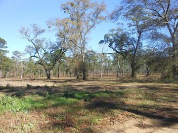 Norias-Plantation-Heritage-Roads.jpg