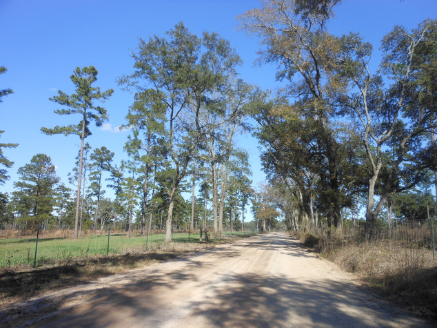 Brock-Road-scenic-North-Florida.jpeg