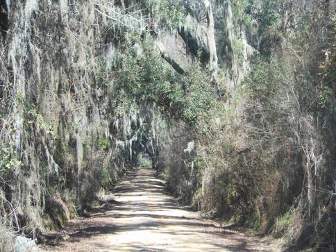 Gum-Swamp-Road-Heritage-Roads.jpg