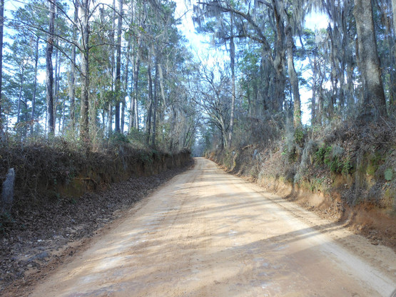 Avalon-Road-North-Florida.jpg