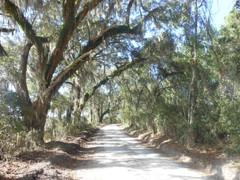 Gum-Swamp-Road-scenic-road.jpeg
