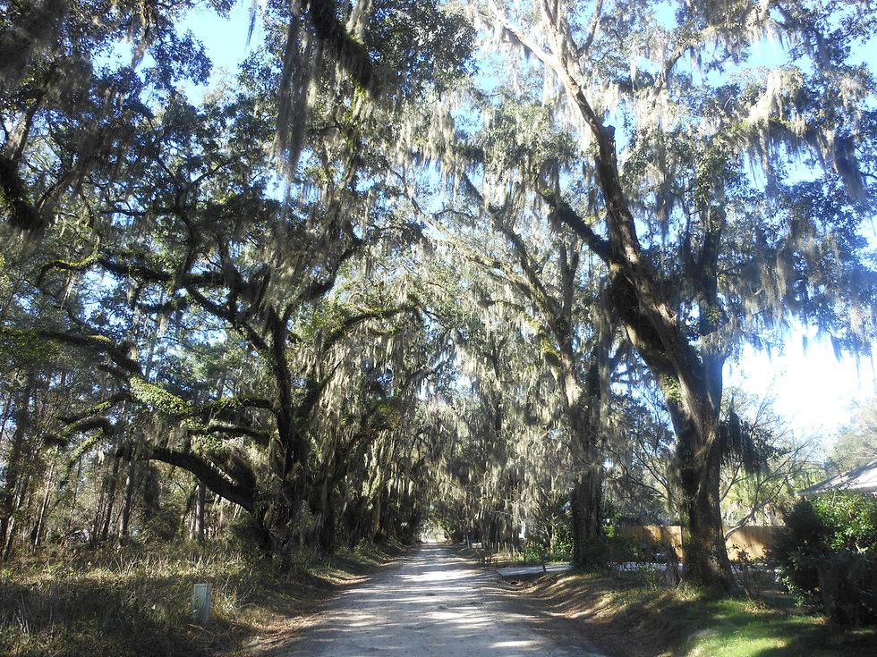 Avenue-of-Oaks.jpg