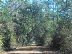 Simpson-Road-North-Florida.jpg
