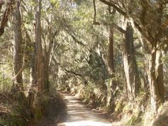 bippus-road-North-Florida.jpg