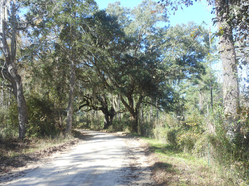 Gum-Swamp-Road-North-Florida.jpg