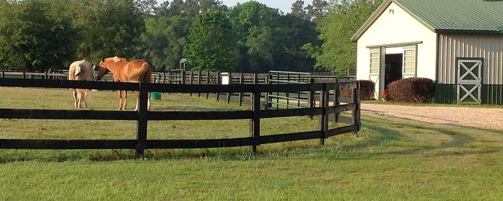 horse-paddocks.jpg