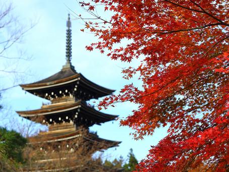 紅葉(瑞鳳殿〜作並〜定義山)