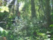 djungel_mthomasson.jpg