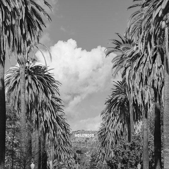 Hollywood Palms BW
