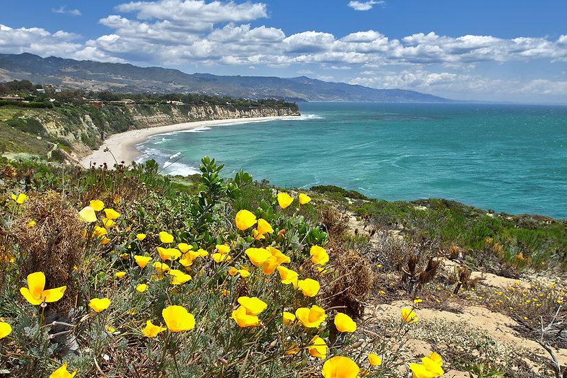Malibu Poppies