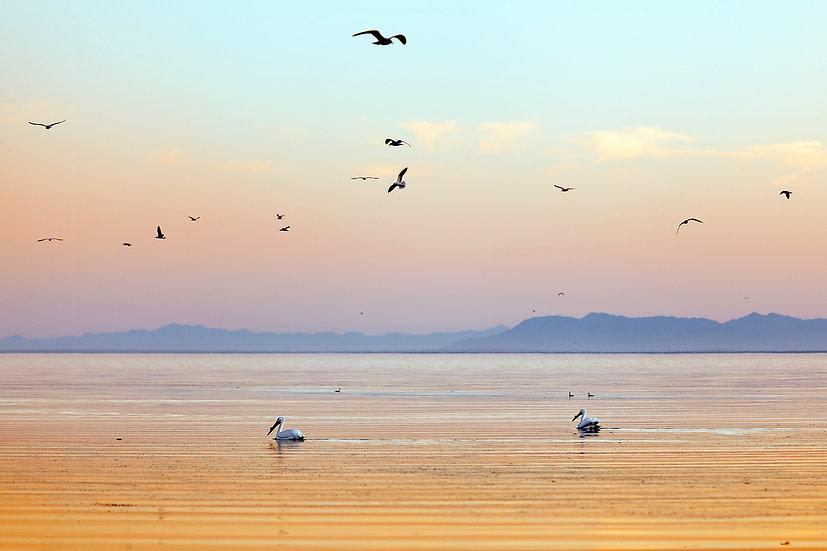Desert Sea Birds