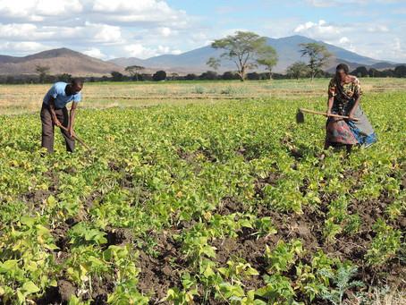IFAD to host Global Donor Platform for Rural Development secretariat