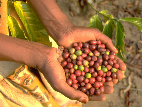 Strengthening agricultural supply chains through the delivery of financial services
