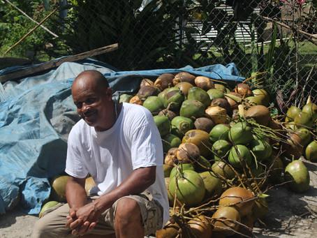 Aligning investors around opportunities in the coconut industry in Jamaica