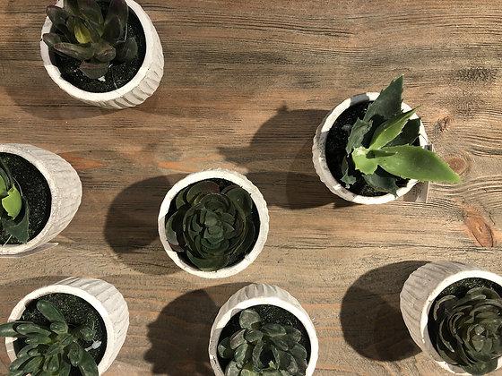 Mini Succulent In Pot