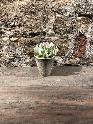 Faux Succulent Pot