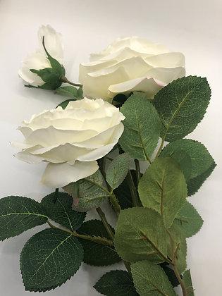 Three Rose Stem