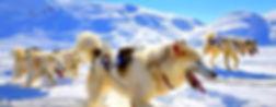 schlittenhunde_S.jpg