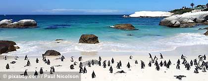 KR_pinguine_S.jpg