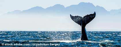 whalewatching_suedafrika_S.jpg