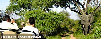 gays_safari_suedafrikaS.jpg