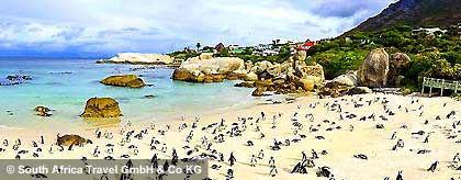 pinguinkolonie_suedafrika_S.jpg