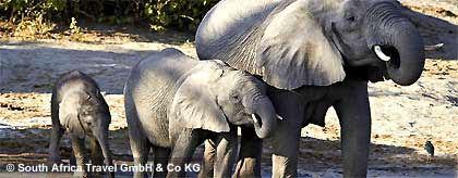 elefanten_botswana_S.jpg
