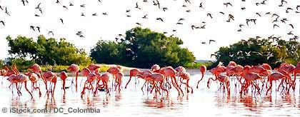 KR_flamingos_S.jpg