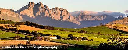 winelands_S.jpg