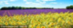 lavendel-provence-S.jpg