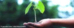 KR_baeume_pflanzen_S.jpg