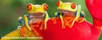 gayreise_costa_rica_frogs_S.jpg