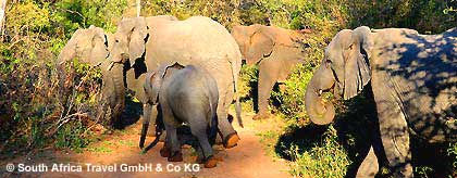 addo-elephant-park_S.jpg