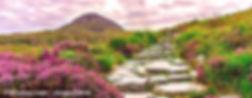 KR_Irland_Naturpfad_S.jpg