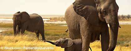 gay_namibiareise_elefant_S.jpg