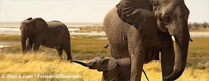 gayreise_namibia_S.jpg