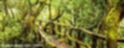 regenwald-lagomera_S.jpg