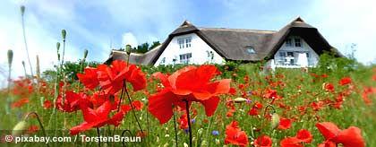 KR_Usedom_Blumenwiese_S.jpg