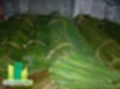 Manila Bamboo Nipa Shingles