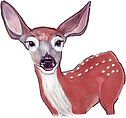 Joy the fawn wonders where her mom is.