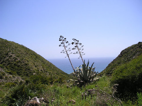 cactustree.jpg