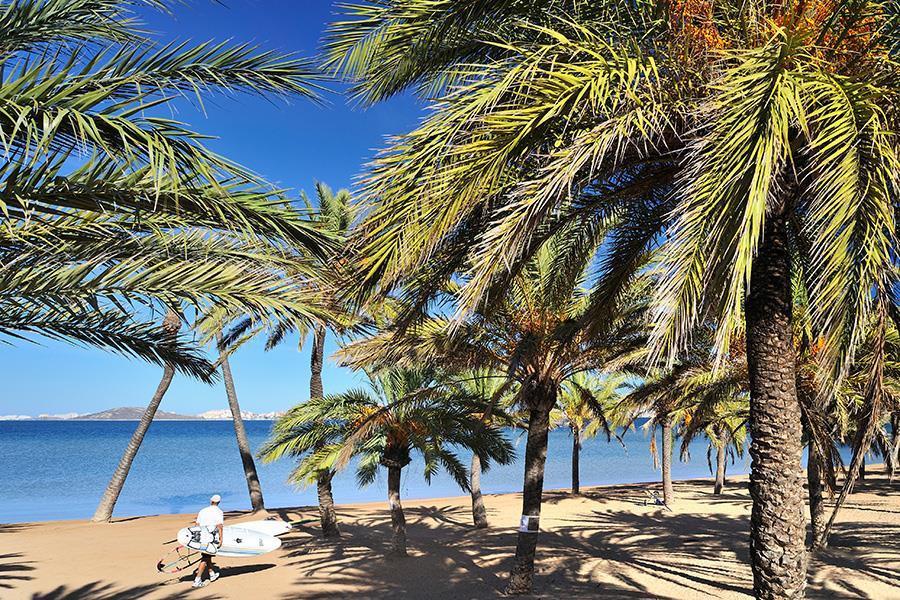 Palms.jpeg