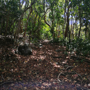 hiking trees 1.jpg