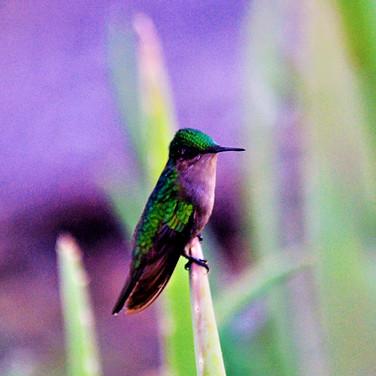 Hummingbird still.jpg