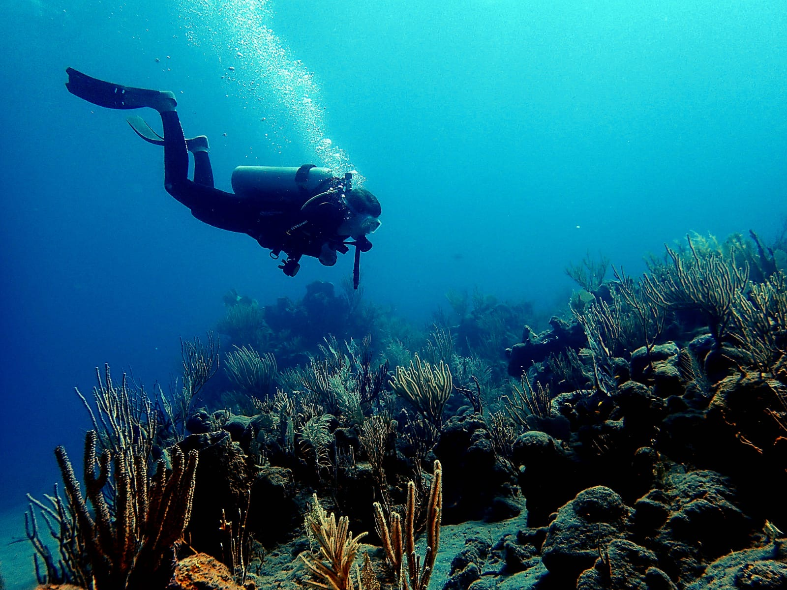 scuba diving around coral region