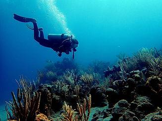 Copy of Diver in Coral.jpg