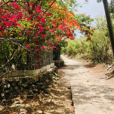 Flowered Road.jpg