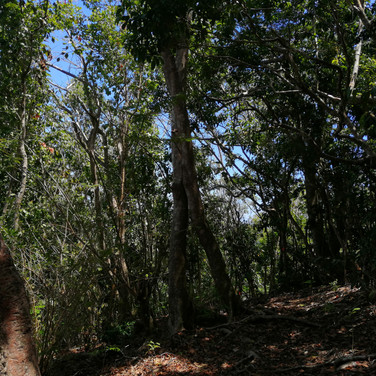 hiking trees.jpg