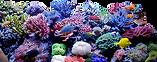 coral-reef.png