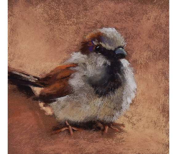 Sparrow on Terracotta